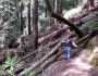 Redwood Forest Trainwreck?